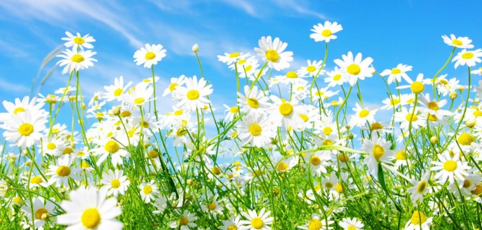 images-of-spring-flowers-and-wallpapers-14