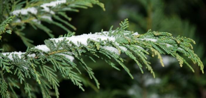 carpe-diem-snow-1071-1024x685