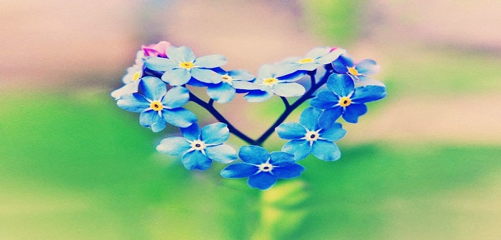 blue-flower-heart-love-facebook-timeline-cover1366x76866250