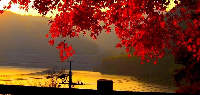 red-autumn-leaves