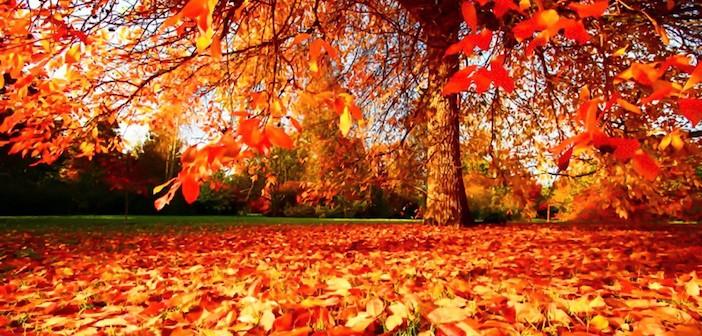 Autumn-Wallpaper-autumn-35867786-1280-800