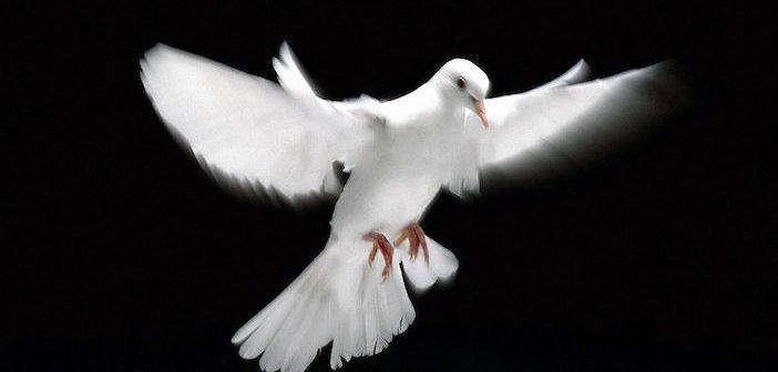 white-dove-flying_96991-1920x1200