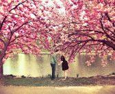 Truyện Ký: Mùa Xuân Và Tình Yêu