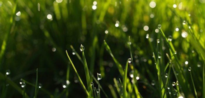 summer_rain-t2