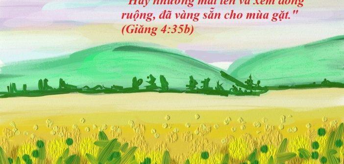 Hãy Nhướng Mắt Lên Và Xem Đồng Ruộng Đã Vàng Sẵn Cho Mùa Gặt